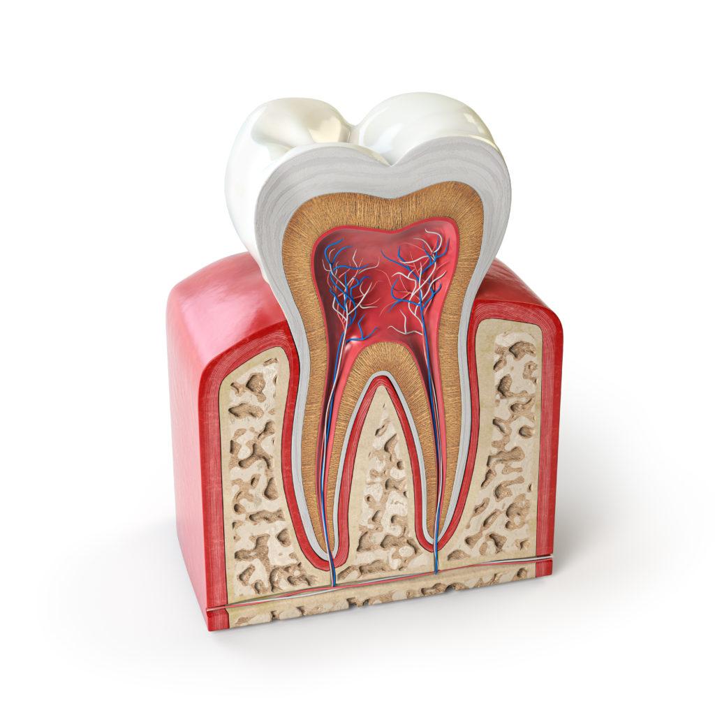 Évaluation de la solubilité de quatre ciments endodontiques dans différents solvants